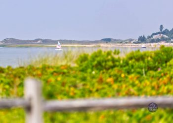 Mayo beach, Wellfleet, August